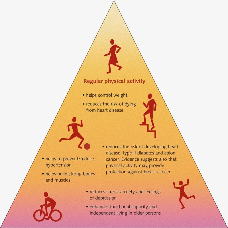 Pour la santé bougez | Pyramide 3